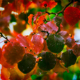 Rain Drop Dew by Diane Johnson - Nature Up Close Leaves & Grasses ( red leaves, green leaves, raindrops, limbs, droplets )
