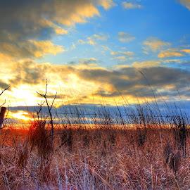 Field by Derrill Grabenstein - Landscapes Prairies, Meadows & Fields ( grasses, field, fence, pasture, sunset )