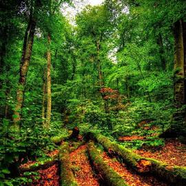by Mahmut Yildirici - Landscapes Forests