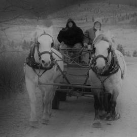 Surreal Hayride by Dave Skorupski - Animals Horses ( ride, hills, horses, horse, sleigh, christmas, tree, cold, woman, path, trees, man, coat,  )