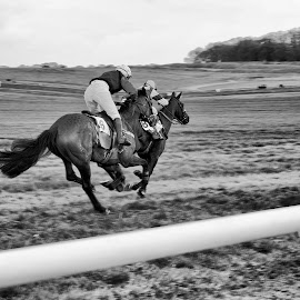 Point to Point by Buzz Covington - Animals Horses ( horse race, b&w, horses, point to point, dorset,  )