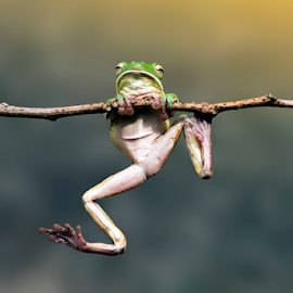 I was able to top by Robert  Fly - Animals Amphibians ( frog, green, amphibians, jump, animal )