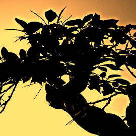 Silouette by Denise Grappeggia D'angelo - Artistic Objects Other Objects ( albero silouetta bonsai giallo nero colori )