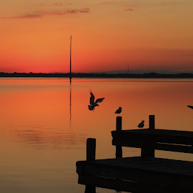 Calm Sunrise by Teri Shearer-Buczkowske - Landscapes Sunsets & Sunrises (  )