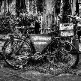 OLD BICYCLE by Guilherme  Junior - Transportation Bicycles ( black and white, transportation, bicycle )