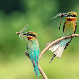 by Prasanna Bhat - Animals Birds