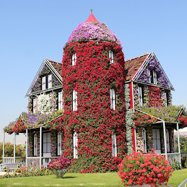 House of Flowers by Muhammed Owais Ashraf - Buildings & Architecture Homes ( miracle, dubai, house, flowers )