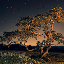 Dancing Tree by Matheus Dalmazzo - Nature Up Close Trees & Bushes ( itapetininga, dancing, cinestudio, tree, stars, night, starscape, nightscape )