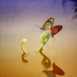 reflexi by Dede Dede - Animals Insects & Spiders ( butterfly, macro, insect,  )
