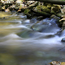 Water in forest by Gil Reis - Nature Up Close Water ( water, nature, stone, forest, portugal, rivers )