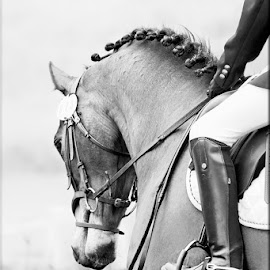 Dressage by Gerhard Jooste - Animals Horses
