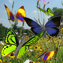 Butterfly animated color LWP! icon