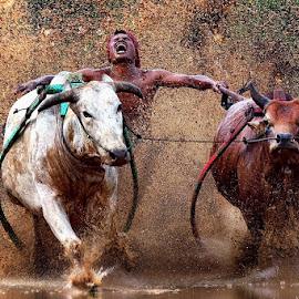 hysteria... by Hendra Nasri - Sports & Fitness Rodeo/Bull Riding ( sport )