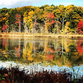 Reflected Majesty  by Sandie Lawler - Novices Only Landscapes ( gordon college autumn, fall colors, 2014, trees, pond )