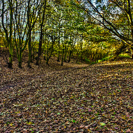 Floor Of Leaves by Danny Spring - Landscapes Forests ( autumnal, tree, autumn, trees, leaves, fall, color, colorful, nature,  )