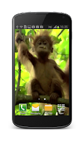 Screenshot of Baby Monkey Live Wallpaper