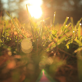 October Sunrise by Andrea Leavens - Novices Only Flowers & Plants ( grass, sunrise, bokeh, golden hour )