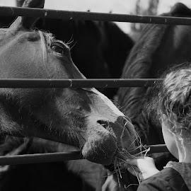 Sure by Lora Treat - Animals Horses