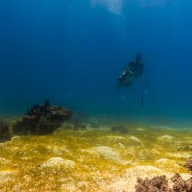 ? by Jim Cunningham - Landscapes Underwater