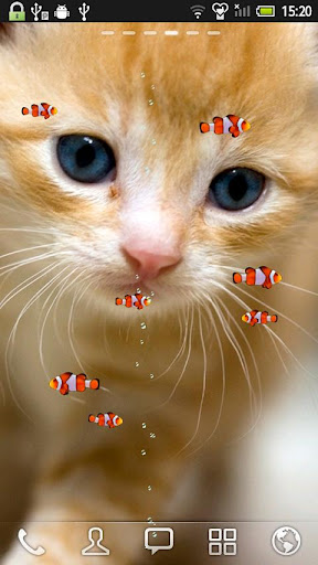 小醜魚和小貓 動態壁紙