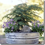 cool season containers