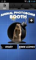 Screenshot of Animal Photobomb Booth