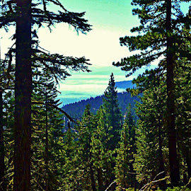 View of Lake Tahoe by Samantha Linn - Landscapes Forests