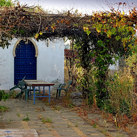 Seville in Summer by Jennifer Wheatley-Wolf - Buildings & Architecture Homes ( jennifer wheatley-wolf, arch, arched door, trellis, seville, blue door, garden, spain )