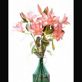 Red Liliy by Stephen Hooton - Flowers Flower Arangements