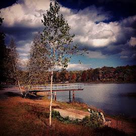 Lone Birch by Nancy Senchak - Instagram & Mobile iPhone