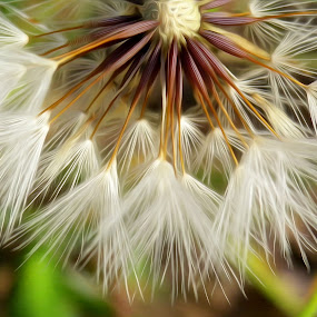 by Kris Pate - Nature Up Close Other plants (  )