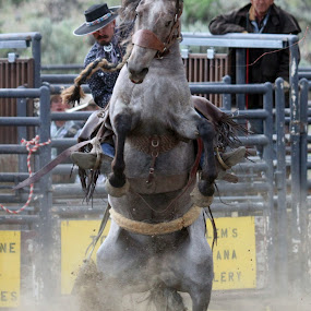 Hanging On by Brandi Nichols - Sports & Fitness Rodeo/Bull Riding ( cowboy, montana, rodeo, gardiner )