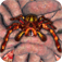 iSpider Monster Pals icon
