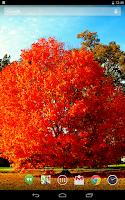 Screenshot of Autumn Leaves Live Wallpaper