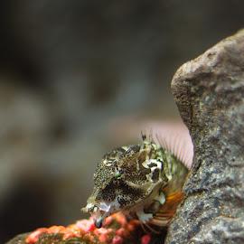 Ripley's Aquarium by Steve Randall - Animals Fish ( water, ripley's, ripley's aquarium, fish, aquarium )