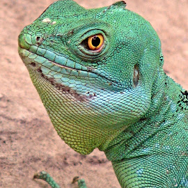 emerald by Uschi Rules - Animals Amphibians ( lizard, light blue, green, hagenbeck, yellow, hamburg, reptiles, zoo, jungle, emerald, iguana, reptile, black )