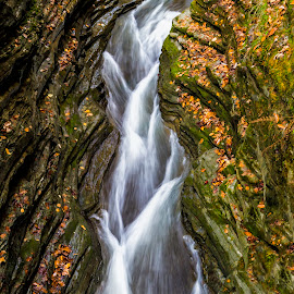 Braided by Karen Celella - Landscapes Forests ( waterfalls, autumn, colors, fall, pixoto, ithaca, ny, color, colorful, nature )