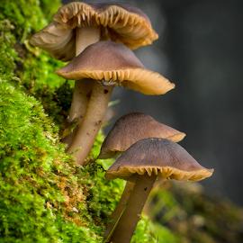 by Derek Hauffe - Nature Up Close Mushrooms & Fungi