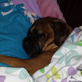 What can I say?  My dog has a tough life watching over and protecting me!  He was curled up in a tight ball on the couch so I just put a warm blanket over him and he stretched right out.  I love my dog!  Max is a good boy!  :-) by Trish Vallely - Novices Only Pets