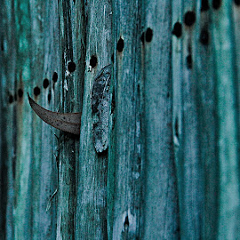 a wooden stained fence by Magdalena Wysoczanska - Abstract Patterns