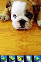 Screenshot of Baby Dog wallpaper