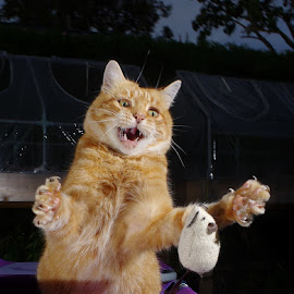 Cat attack by Turnip Towers - Animals - Cats Playing (  )