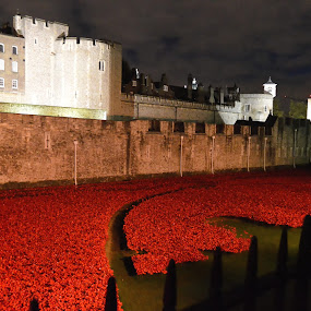 The Red Tower by James Booth - Buildings & Architecture Other Exteriors ( poppies, the tower of london )