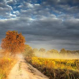 Moon Safari by Michal Mierzejewski - Landscapes Travel ( clouds, michał, wild, ar7, mierzejewski, werol, road, morning, wilderness, dawn, red, sky, tree, blue, autumn, fog, path, cloud, sunrise, ar7club, michal, mist, september,  )