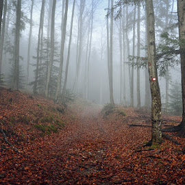 Path in the woods by Mirov Vorim - Landscapes Forests ( fall, path, woods, mist, nature, landscape )