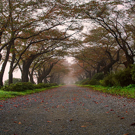 by Bayoue Zantoso - Nature Up Close Trees & Bushes