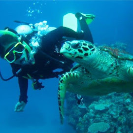 Me with Turtle @ Great Barrier Reef by Karla Vazquez - Nature Up Close Water