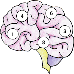 Brain Memory Exercise 1.07 Apk