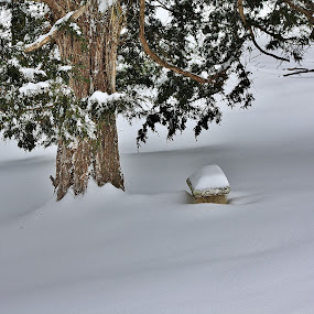 The Bench In The Cedars by Angela Faith - Nature Up Close Other Natural Objects ( winter, bench, snow, gardens, birds )