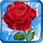 Summer Rain, Flowers, HD LWP 1.7.0 Apk